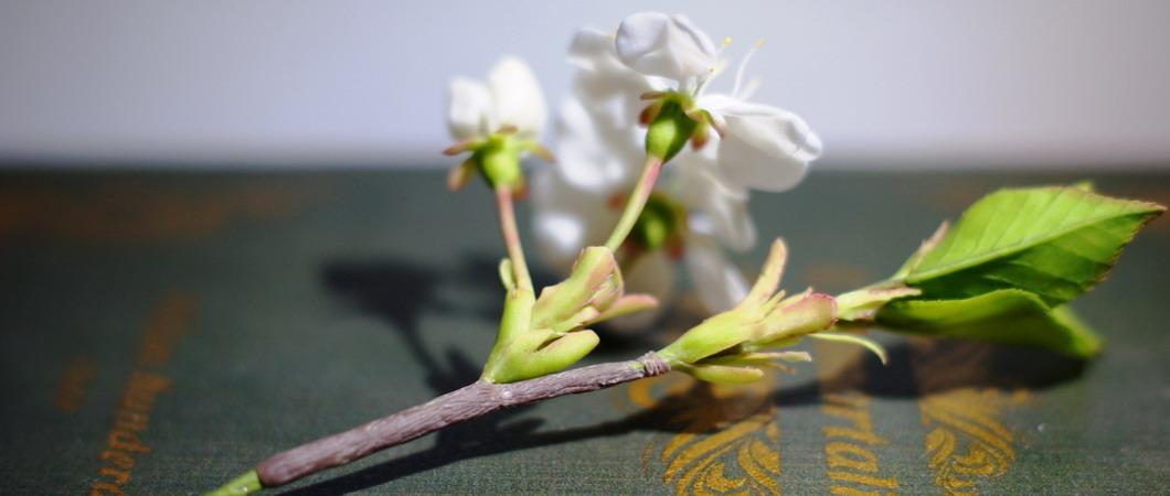 Ветка вишни из полимерной глины